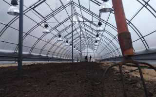 Проект промышленной теплицы. Основные виды и строительство фермерских промышленных теплиц