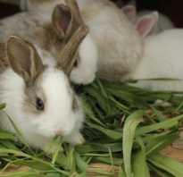 Чем пропоить кроликов для профилактики болезней.