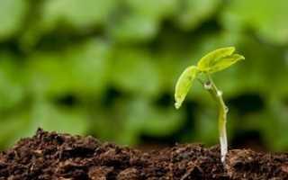 Плодородие почвы определяется содержанием в ней. Плодородие