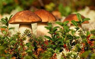 Практическое применение грибов. Грибы в пищевой и лекарственной промышленности
