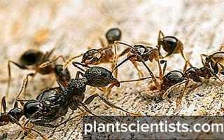 Мурацид отзывы. Препарат «Мурацид» от муравьев: состав, инструкция по применению, отзывы