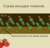 Посадка помидоры в теплицу требует грамотного подхода. Посадка помидор в теплице