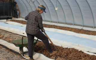 Подкормка лука весной. Подкормка лука севка на репку и правила ухода в открытом грунте