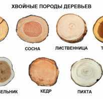 Породы деревьев и их виды. Разнообразие видов древесины, их свойства