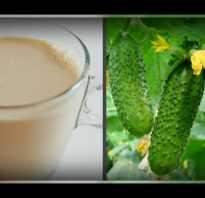 Подкормка огурцов йодом и молоком. Молоко с йодом для огурцов
