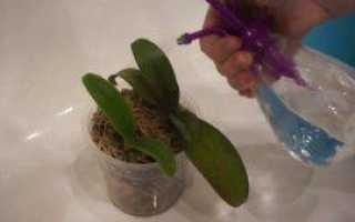 Чем обработать орхидею. Обработка срезов орхидеи — как ухаживать