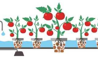 Раствор для гидропоники помидоры. Помидоры. Выращивание методом гидропоники