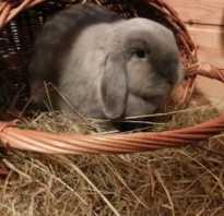 Перевозка кроликов. Перевозка кролика на автомобиле