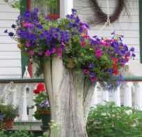 Пень на даче как украсить. Как украсить пень от дерева на дачном участке