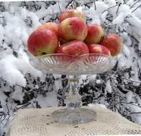 Сорт яблок ранет фото. Лучшие сорта яблок: фотографии и описание ранних и поздних сортов яблок