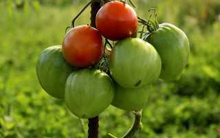 Помидоры подкормка и уход в открытом грунте. Уход за томатами после высадки рассады в открытый грунт. Часть 1