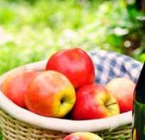 Сидр из консервированного яблочного сока. Как сделать вино из сока яблок дома