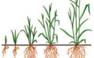 Что такое вегетация плодовых деревьев. Что такое период вегетации растений и как его определить