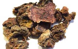 Применение золотого корня в народной медицине. Растение золотой корень, его полезные свойства и применение