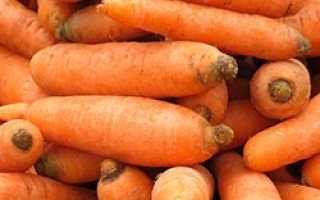 Морковь витаминная 6 отзывы фото. Морковь Витаминная 6: характеристика и описание сорта