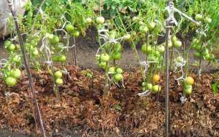 Мульчирование томатов в теплице газетами. Мульчирование томатов в дачной теплице
