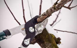 Обрезка ранетки. Обрезка для «чайников». Как придать форму и проредить ветви деревьев