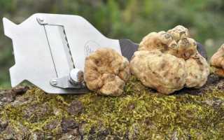 Можно ли выращивать трюфели в домашних условиях. Можно ли выращивать трюфели в России?
