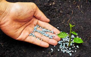 Чем удобрять цветы для обильного цветения. Удобрения для комнатных растений и цветов