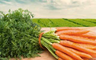 Почва для посадки моркови весной. Посадка моркови весной в открытый грунт семенами. Лучшие сорта и способы посадки