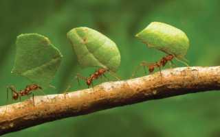 Появились муравьи в теплице что делать. Как избавиться от муравьев в теплице –эффективные профессиональные и народные способы