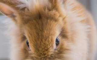 Можно ли кроликам огурцы свежие. Можно ли давать кроликам огурцы свежие