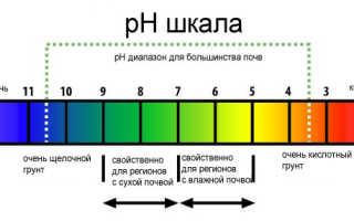 Посадка голубики садовой осенью в белоруссии. Секреты удачной посадки голубики: принципы посадки, уход за посаженными кустами
