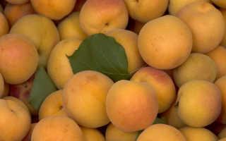 Слива и абрикос это ягода или фрукт. Абрикос это ягода или фрукт: ценность плодов и обрезка растений