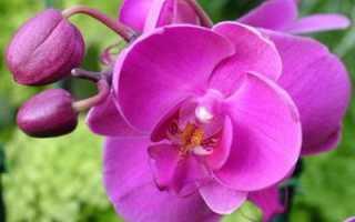 Плесень на орхидее как лечить. Белая плесень у орхидеи