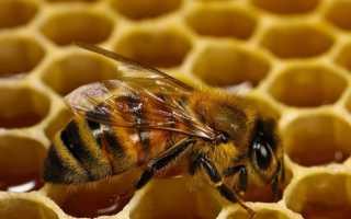 Сироп для пчел осенью пропорция. Сироп для пчел на зиму пропорции: виды, правила приготовления, осенняя подкормка