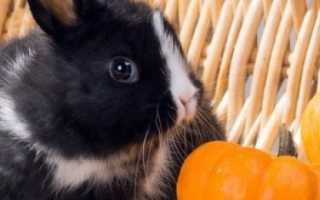 Кролики 1 месяц. Чем кормить маленьких крольчат?