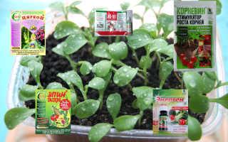 Усилитель роста для цветов. Разбираемся в стимуляторах и регуляторах роста растений