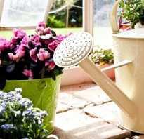 Подкормка комнатных цветов осенью. Подкормка домашних цветов и растений народными средствами