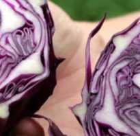 Синяя капуста сорта. Сорта и выращивание краснокочанной капусты, рецепты блюд