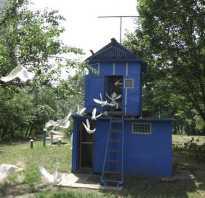 Проекты голубятен. Строительство голубятни: высокое качество и функциональность своими руками