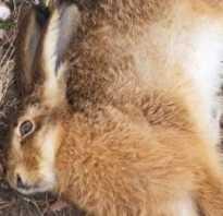Кролики умирают без видимых причин. Разбираем все аспекты гибели кроликов