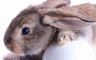 Чем лучше кормить кроликов зерном или комбикормом. Какое зерно должно быть в рационе кроликов