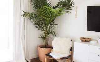Удобрение для пальмы в домашних условиях. Как удобрять комнатную пальму