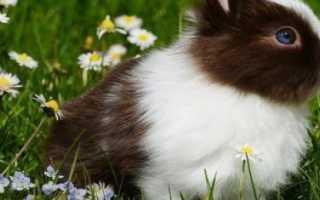 Кролик чихает как лечить. Почему кролик чихает