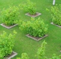 План посадки деревьев и кустарников на участке. Планировка огорода и плодового сада: от чертежа до высадки культур в примерах