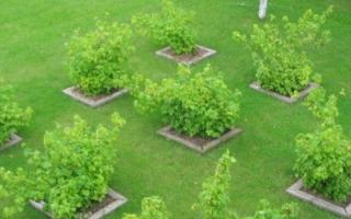 Планировка фруктового сада. Как правильно спланировать свой сад?