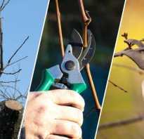 Обрезка молодых груш весной видео. Обрезка груши весной: схема для начинающих, как правильно обрезать грушу.